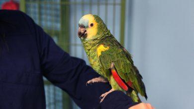 علائم بیماری هایی که از پرندگان به انسان ها سرایت می کنند