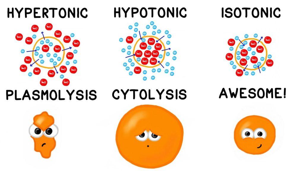 در بدن موجودات زنده، بسیاری از سیالات از محلول قند (گلوکز) و آب تشکیل شده اند. مولکول های آب می توانند از غشای بیرونی سلول عبور کنند، اما گلوکز چنین امکانی را ندارد. سلول، از طریق تنظیم فشار اسمزی درونش با فشار اسمزی سیالی که آن را در برگرفته است (بدست آوردن یا از دست دادن مولکول های آب)، ایزوتونیک باقی می ماند.