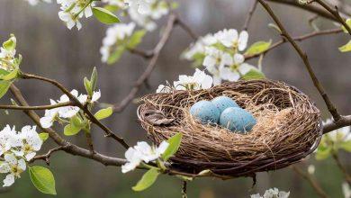 آشنایی با ساختار پیچیده و متنوع آشیانه پرندگان