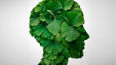 تاثیر جینکو بیلوبا در بهبود کیفیت و عملکرد حافظه