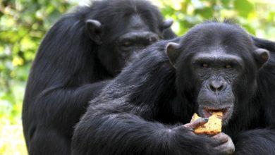 آیا حیوانات روش های درمانی را از والدین خود می آموزند؟