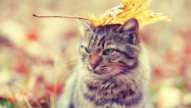 مراقبت از گربه در برابر بیماری های فصل پاییز