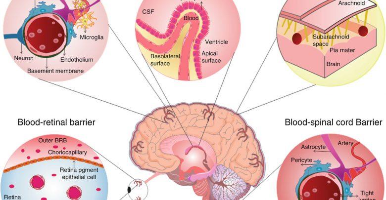 سد خونی مغز چیست؟