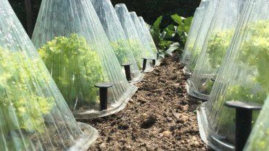 چگونه از گیاهان در برابر یخ زدگی محافظت کنیم؟