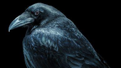 مغز پرندگان شگفت انگیز است